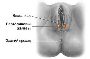 Bartolinită