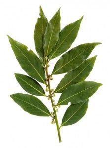 bobkový list alergií u dětí